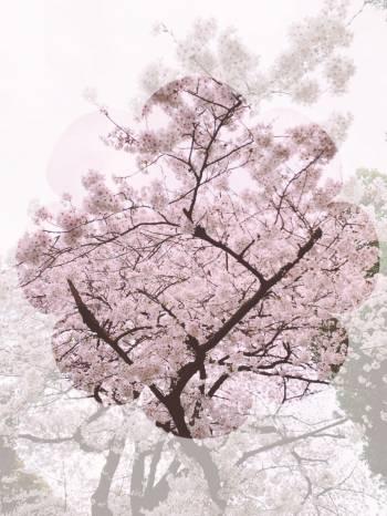 おはようございます☀(2020/03/22 09:06)水野 紫穂のブログ画像