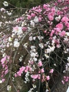 おはようございます☀(2017/04/28 11:17)早野 友希のブログ画像