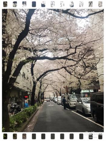 こんばんは(2017/04/09 04:18)成宮 秋音のブログ画像