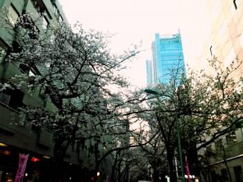 🌸あきね🌸(2019/03/27 17:46)成宮 秋音のブログ画像