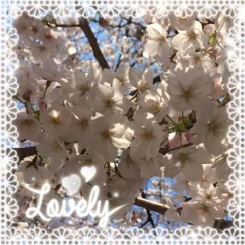お花見🌸🍡(2017/04/04 12:02)堀北 ルウカのブログ画像