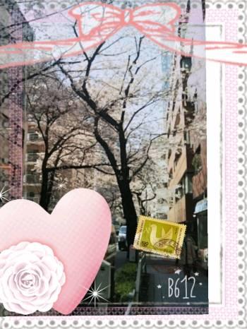 桜(2017/04/05 13:42)川島 由衣のブログ画像
