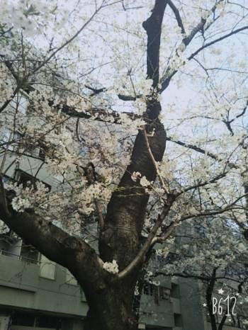 おはよーございます(2017/04/06 12:42)川島 由衣のブログ画像