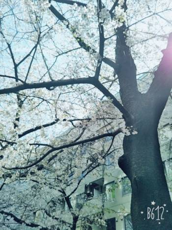 。(2017/04/13 14:43)川島 由衣のブログ画像