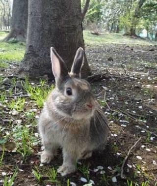 おはようございます☀(2017/05/27 08:22)希埼 香菜のブログ画像