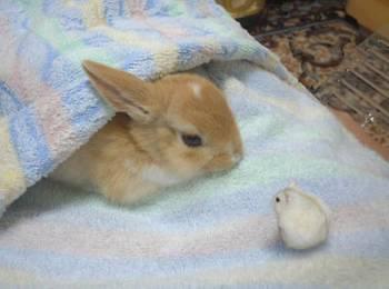 ありがとうございました❤(2017/07/08 10:33)希埼 香菜のブログ画像