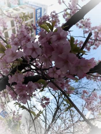 ヽ(*´∀`)(2018/03/07 22:31)大槻 しおんのブログ画像
