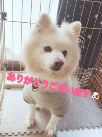 先日は…(2018/03/07 13:11)七草 のんのブログ画像