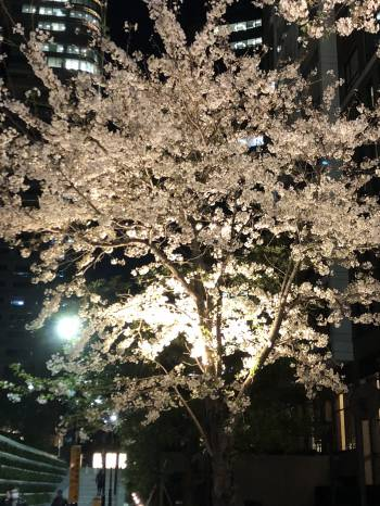 こんにちは♪(2019/04/09 11:47)小寺 杏樹のブログ画像