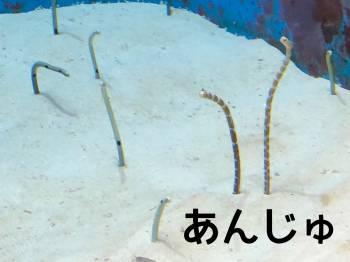 五反田のチンアナゴ🐠(2021/02/25 14:21)小寺 杏樹のブログ画像