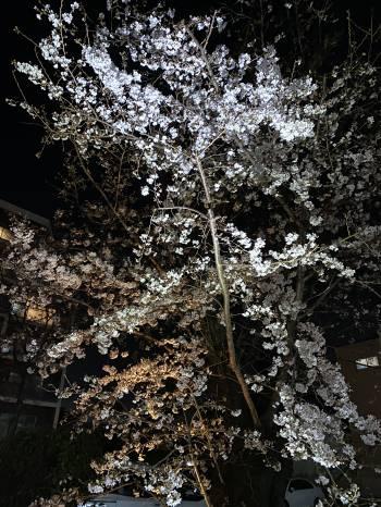 4月ですね🌸(2021/04/04 10:30)小寺 杏樹のブログ画像