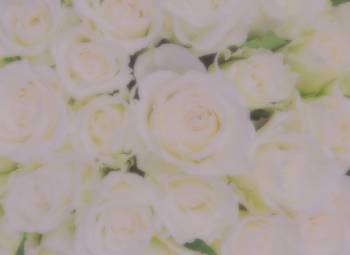 花日和(2019/04/25 18:02)朝霧 麗華のブログ画像