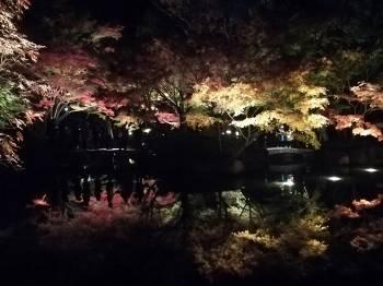 紅葉🍁(2020/11/05 11:42)三井 あかねのブログ画像