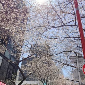 今日も12時から(2020/04/10 11:43)菊池 あずみのブログ画像