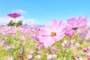 お休みごめんなさい(2018/08/05 00:49)葵 比奈のブログ画像